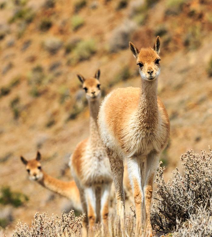 Desert Animals - Jan-Eric Osterlund