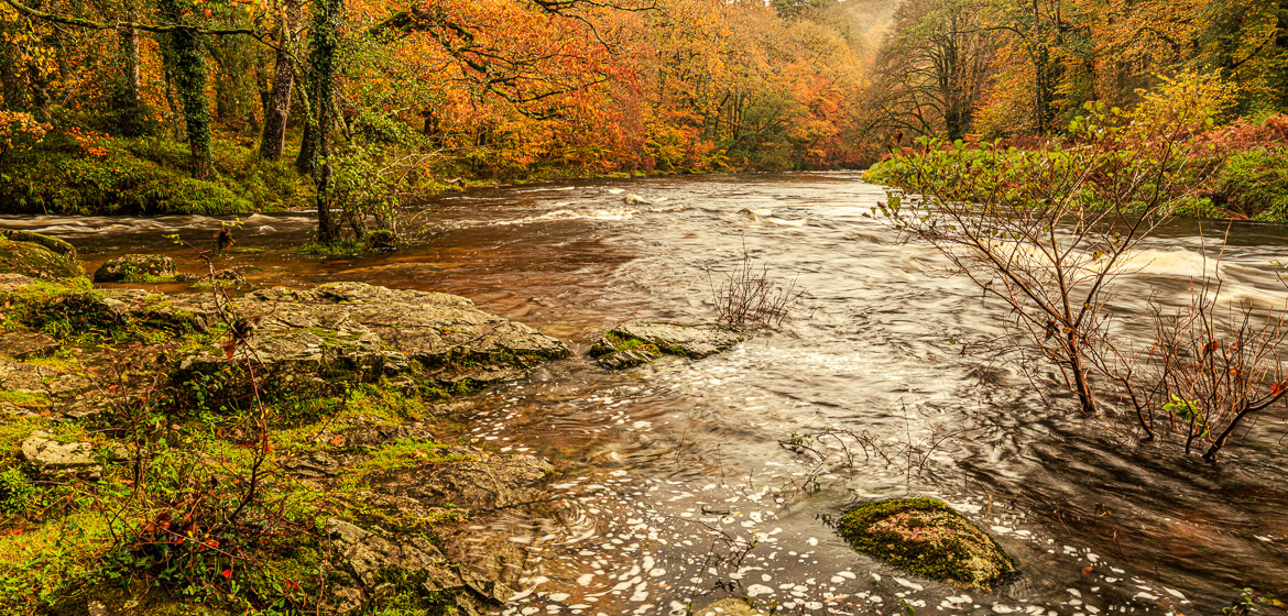 River Dart in November with pronounced yellows and reds.