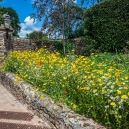 The entrance to the Manor with wildflowers planted at one side